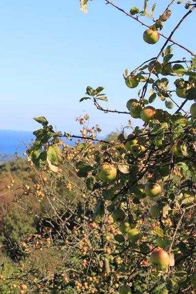 Caminos entre manzanos, playas y montañas