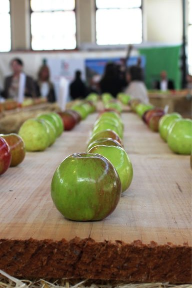 Festival de la manzana