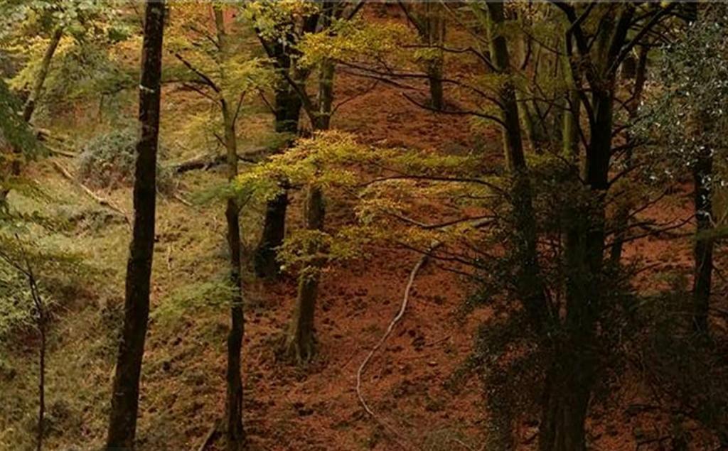 Bosque en otoño en la Sierra del Sueve Colunga