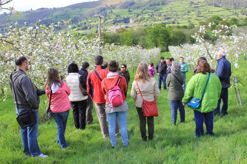 Semana de la floración del manzano